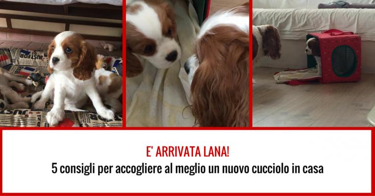 E-ARRIVATA-LANA-5-consigli-per-accogliere-al-meglio-un-nuovo-cucciolo-in-casa-765x400