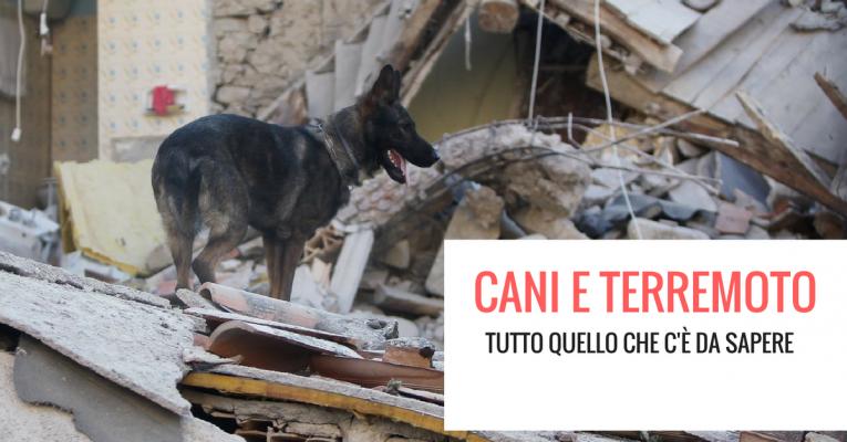 Cani-e-terremoto-765x400