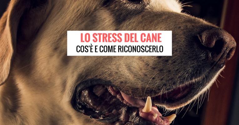 lo stress del cane
