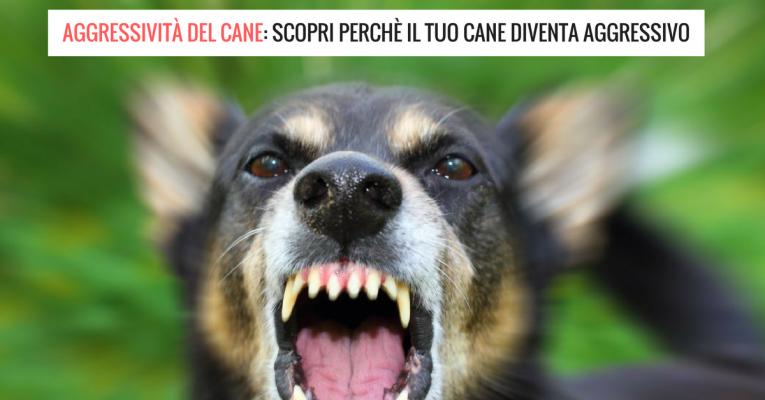 aggressività del cane