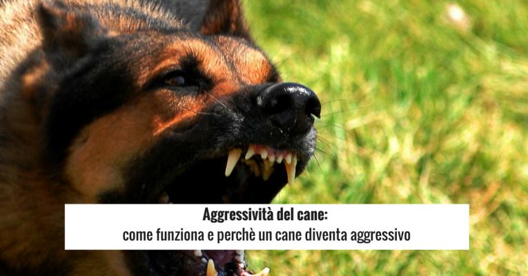 Aggressività-del-cane_-come-funziona-e-perchè-un-cane-diventa-aggressivo-765x400