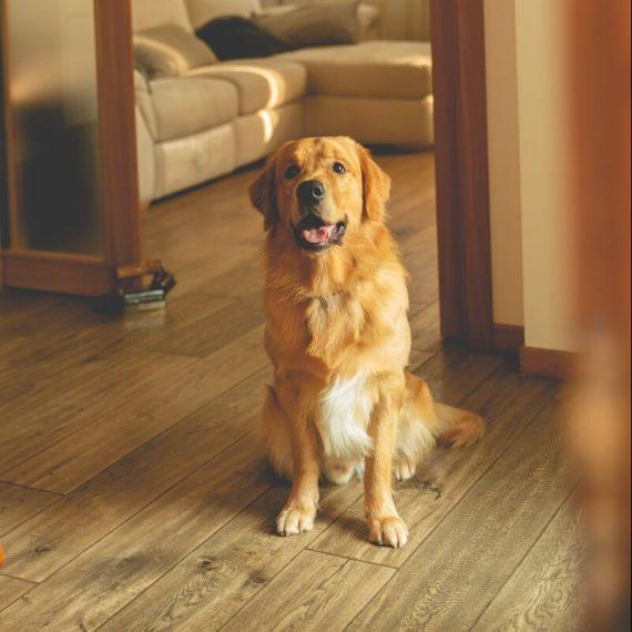 cane-solo-pensione