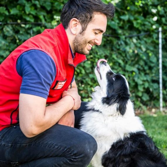 addestramento-cane-istruito