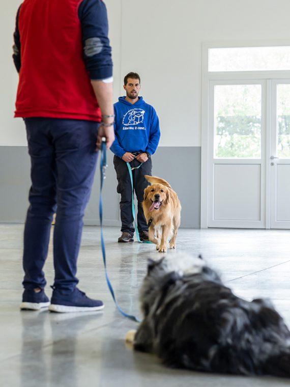 il-cane-istruito_3583