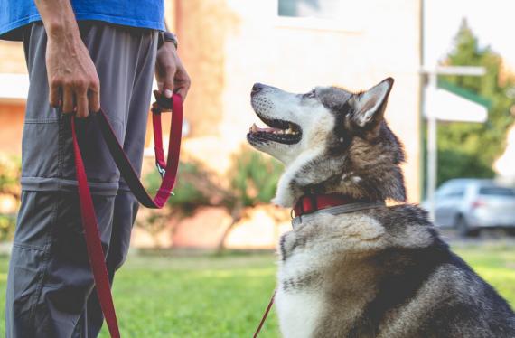 Cane e istruttore cinofilo