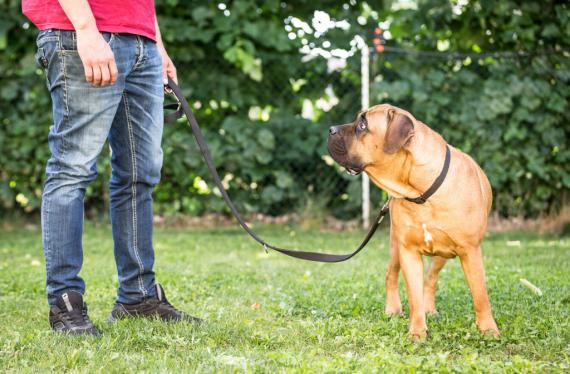 Istruttore cinofilo con cane